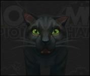 Cat2004.jpg