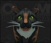Cat2010.jpg