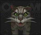 Cat2014.jpg