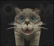 Cat2036.jpg