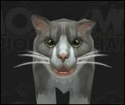 Cat2037.jpg