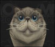 Cat2Pudge1.jpg