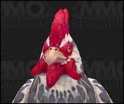 Chicken2020.jpg