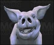 Pig2009.jpg
