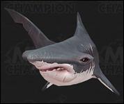 Shark2002.jpg