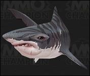 Shark2020.jpg