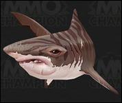 Shark2022.jpg