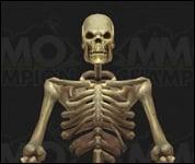 Skeleton2003.jpg