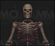 Skeleton2004.jpg