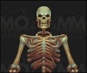 Skeleton2005.jpg